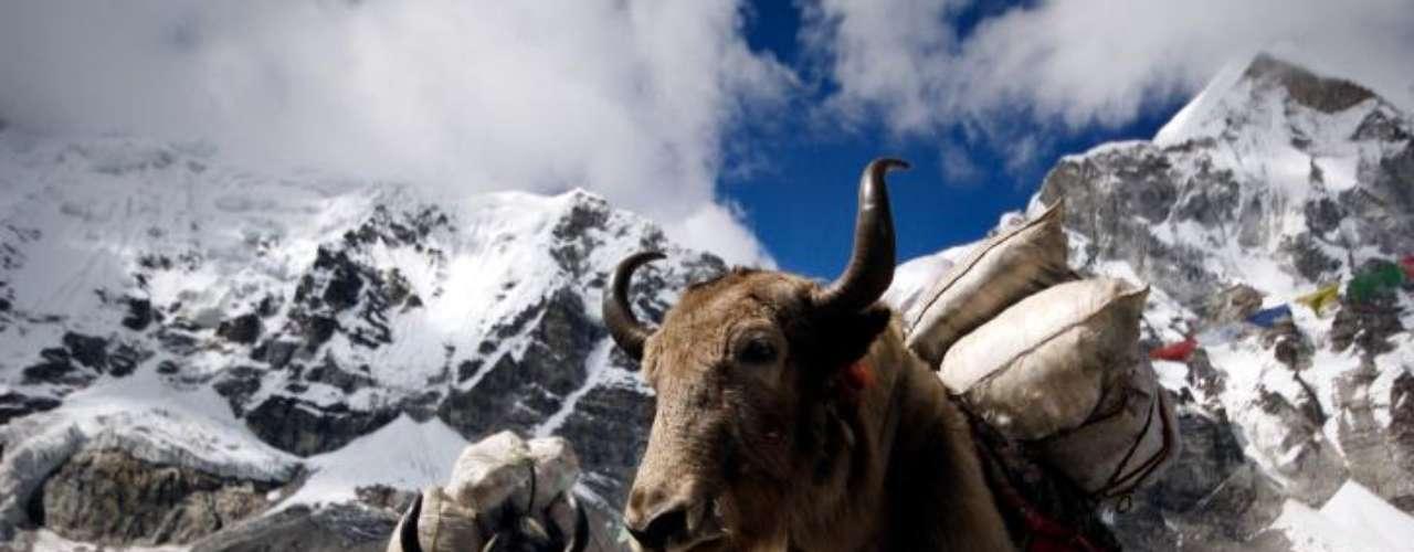 El Everest, la montaña más alta del mundo, es ideal para los amantes del senderismo. Está localizada en el Himalaya, en el continente asiático, y marca la frontera entre Nepal y China. Eso sí, toma tus precauciones.