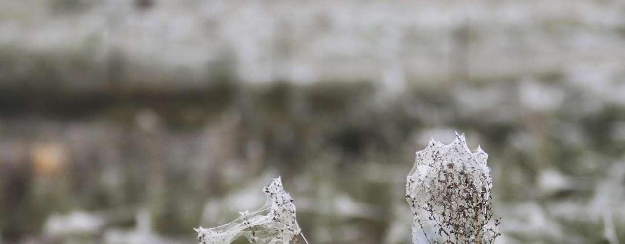 Miles de arañas crearon espeluznantes telas sobre grandes áreas de Australia, afectada por las inundaciones, después de verse obligadas a buscar refugio por la crecida de las aguas. Expertos afirman que las arañas podrían estar tejiendo las pegajosas telas para sobrevivir a las inundaciones, que obligaron a miles de personas a abandonar sus hogares durante la semana pasada. Las telas de araña han sido vistas cerca de la ciudad de Wagga Wagga en Nueva Gales del Sur.