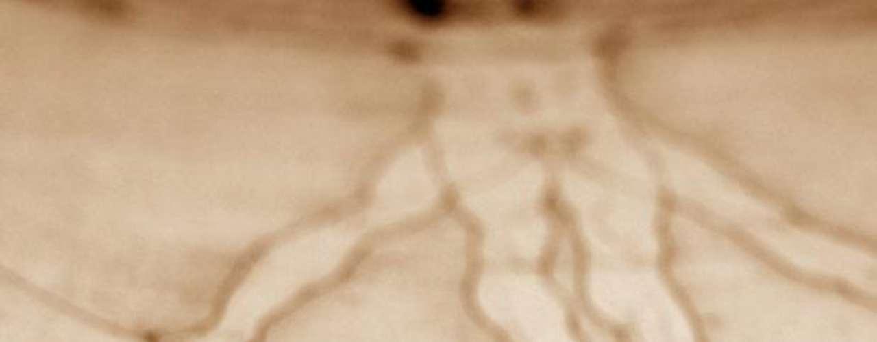 Bill Gates es uno de los hombres más ricos del mundo, por ello no parecería anormal que pueda comprar lo que quiera. El amigo Gates pagó USD 30.802.500 por el Codex Hammer, el diario escrito por Leonardo da Vinci en el que plasmó pensamientos, reflexiones y comentarios sobre astronomía y diversos tópicos. El diario fue vendido en una subasta en 1994 por la casa Christie´s, tres años después, Gates liberó una versión digital para que todo el mundo pueda disfrutar esta reliquia.