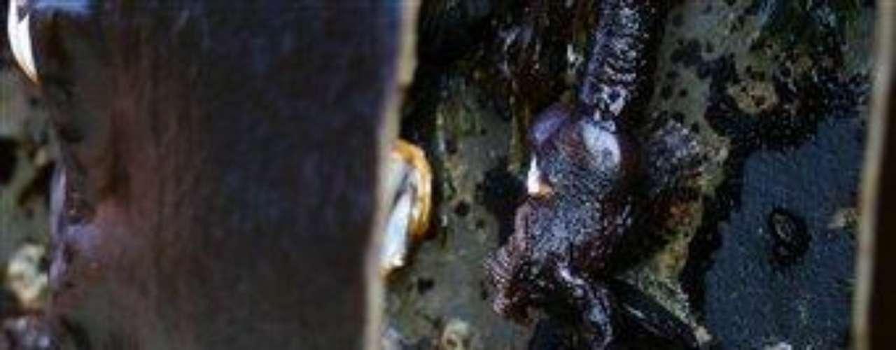 Se asignaron policías estatales para evitar que la gente subiera al muelle, dijo Mitch Vance, administrador del programa de mariscos del Departamento de Pesca y Vida Silvestre de Oregon, quien tomó muestras la mañana del miércoles de los mejillones, percebes y otros moluscos que colgaban del muelle. (Fuente texto: AP)