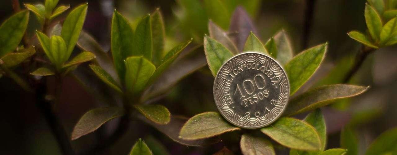 Moneda de 100: su grabado en el anverso es un Frailejón con unas líneas horizontales en la parte inferior izquierda que se van dispersando en la parte derecha de esa cara. En el costado lateral izquierdo se podrá leer el nombre común y científico de dicha planta.