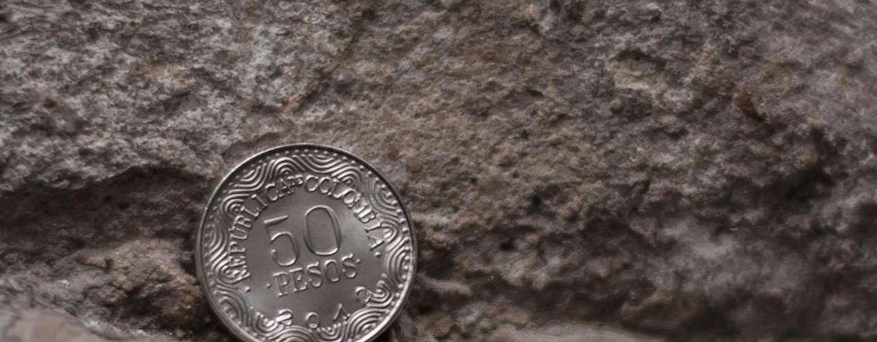 Moneda de 50: su grabado en el anverso es un Oso de Anteojos con unas líneas horizontales en la parte inferior izquierda que se van dispersando ha c i a la parte derecha de e s a cara. En la parte superior, el nombre común y científico de esta especie.