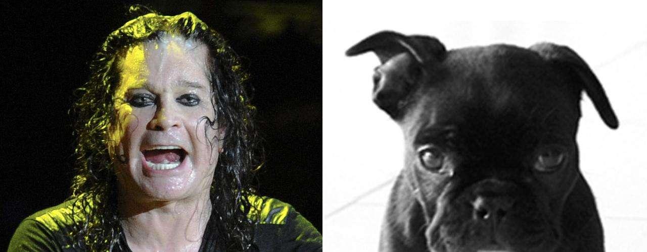 El Bulldog francés tiene mucho parecido con Ozzy Osbourne, porque pueden dar sorpresas tan radicales como lo hizo el ex Black Sabbath durante su aparición en el reality \