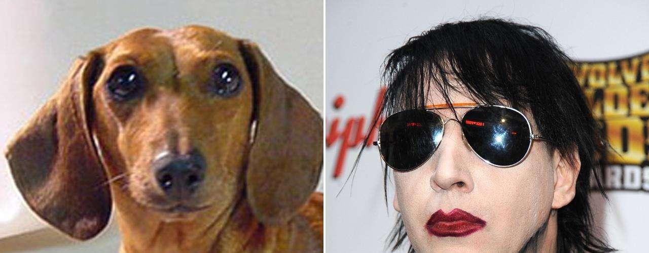 Marilyn Manson es controversial, crítico y rebelde. Características suficientes para compararlo con un Dachshund, que a pesar de su tamaño pequeño es muy valiente. La raza no suele satisfacer las necesidades de obediencia y de respeto a la autoridad de muchas personas, tal como actúa Manson, asegura David.