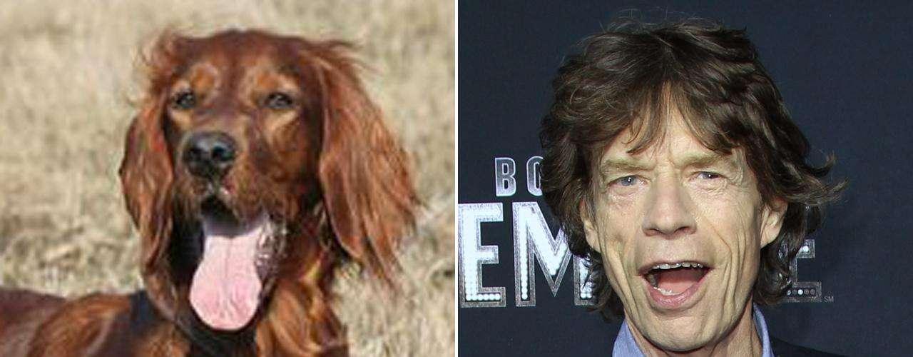 Como líder de los Rolling Stones, Mick Jagger posee la capacidad de derrochar juventud y energía en el escenario a pesar de sus 68 años de edad. El Setter Irlandés se resiste a crecer tanto mental como físicamente, incluso en sus años de vejez mantiene un aspecto simpático y de cachorro.