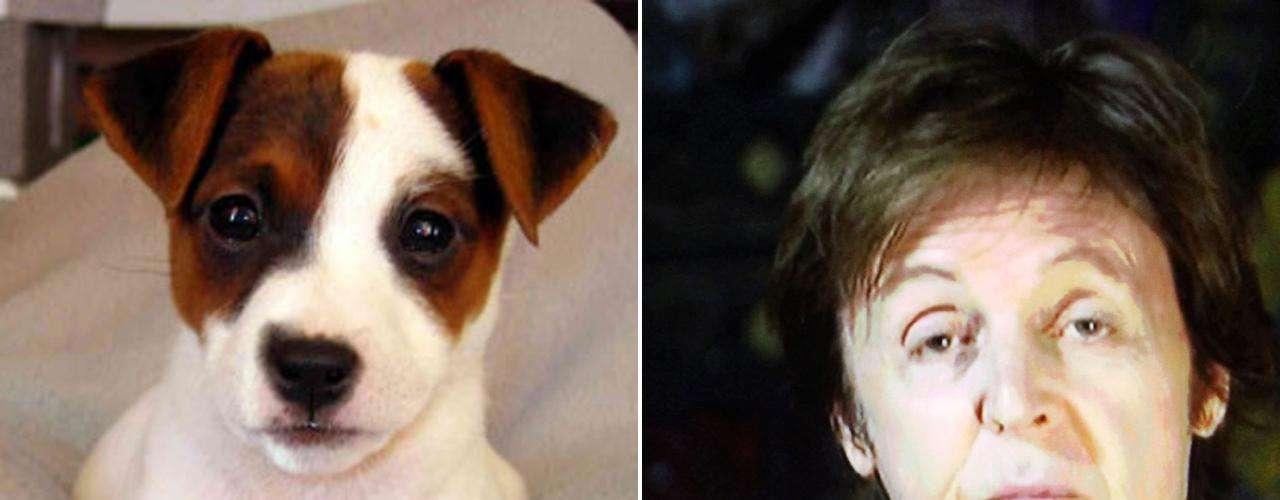 Paul McCartney y el Jack Russell Terrier poseen distintas similitudes. Son activos e inquisitivos, los distingue su energía e interminable curiosidad. Mientras el segundo es valorado por su carisma inigualable, virtud que hace a esta raza aparecer en la pantalla, McCartney es admirado por su carácter amigable.