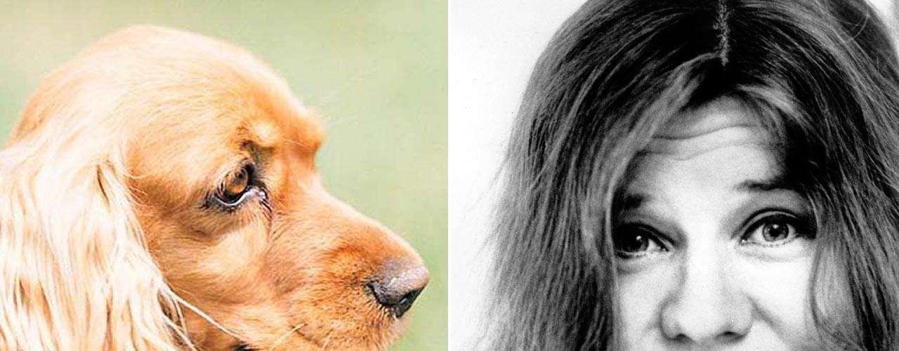 El Cocker Spaniel es un perro activo, apasionado y dulce. Con su mirada triste suele convencer a cualquiera, dominar y manipular, por ello, es el más cercano al carácter de Janis Joplin que demostraba su pasión por la música a través de su potente voz.
