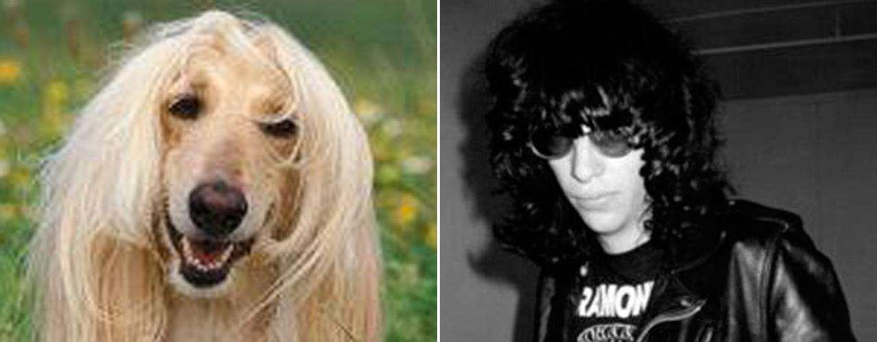 Joey Ramone fue un hombre que siempre estuvo en contra de lo establecido, actitud que lo acerca en carácter con el Galgo Afgano, criatura con pensamiento independiete y espíritu libre. No suelen copiar el comportamiento de otros perros, crean el suyo propio.