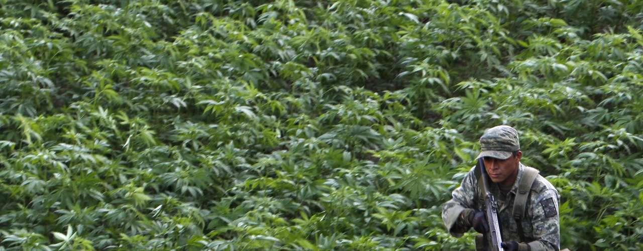 Esta banda criminal se dedica especialmente al tráfico y distribución de cocaína, marihuana, metanfetaminas y heroína procedente de Colombia y del sureste asiático para su introducción en Estados Unidos, pero también se cree que produce sus propias anfetaminas, opio y marihuana.