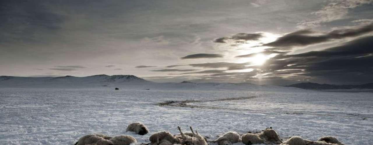 Provincia Arkhangai, a unos 30 kilómetros de la aldea Ulziit, donde la familia Tsamba trata de sobrevivir con su rebaño. Los Tsamba han perdido 20 ovejas tras dos días fríos de invierno. La familia Tsamba vive al límite, luchando en los duros inviernos junto a su rebaño de ovejas. Las severas condiciones del invierno mongol, conocido como \