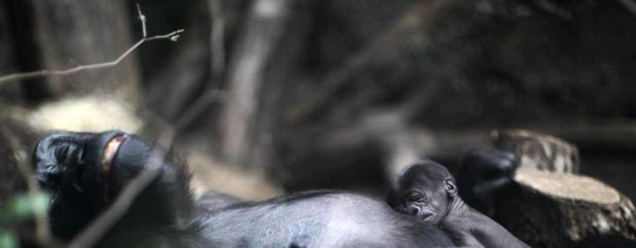 El cachorro, que nació el 10 de julio, todavía no tiene nombre.