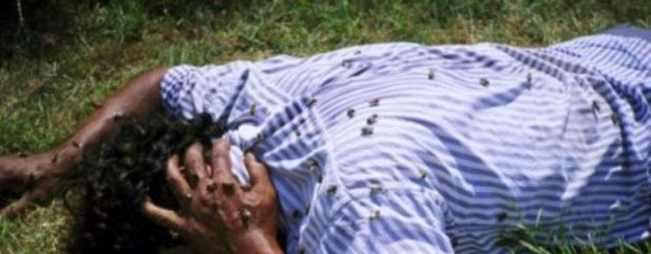 Un hombre murió y al menos tres resultaron heridos tras el ataque de un enjambre de abejas \