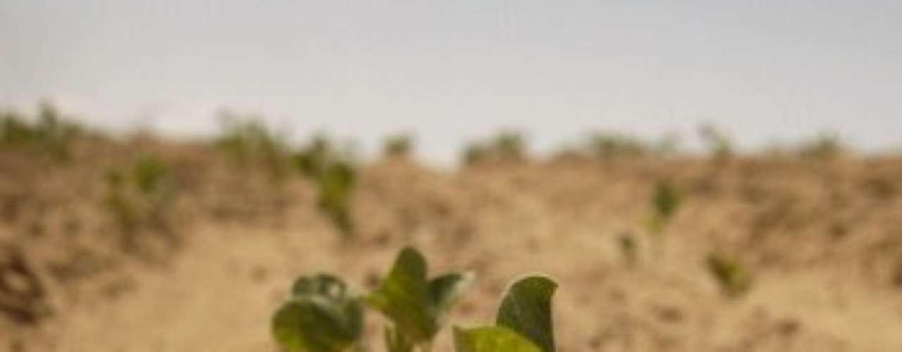 Vilsack dijo que la sequía está empeorando para los agricultores que se han visto más afectados y que el marchitamiento de las cosechas implica que habrá mayores precios de los alimentos.