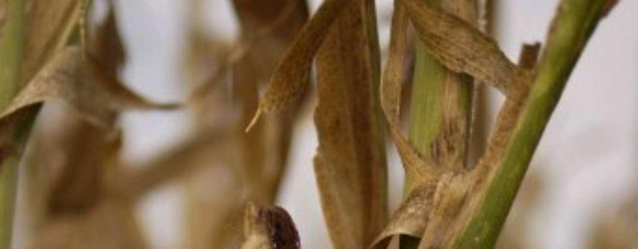 Los meteorólogos anticipan pocas lluvias para la tarde del miércoles en algunas partes de la costa este y el centro del país. Pero su contribución sería muy pequeña y demasiado tardía para muchas zonas claves, como las llanuras centrales y la región productora de maíz.
