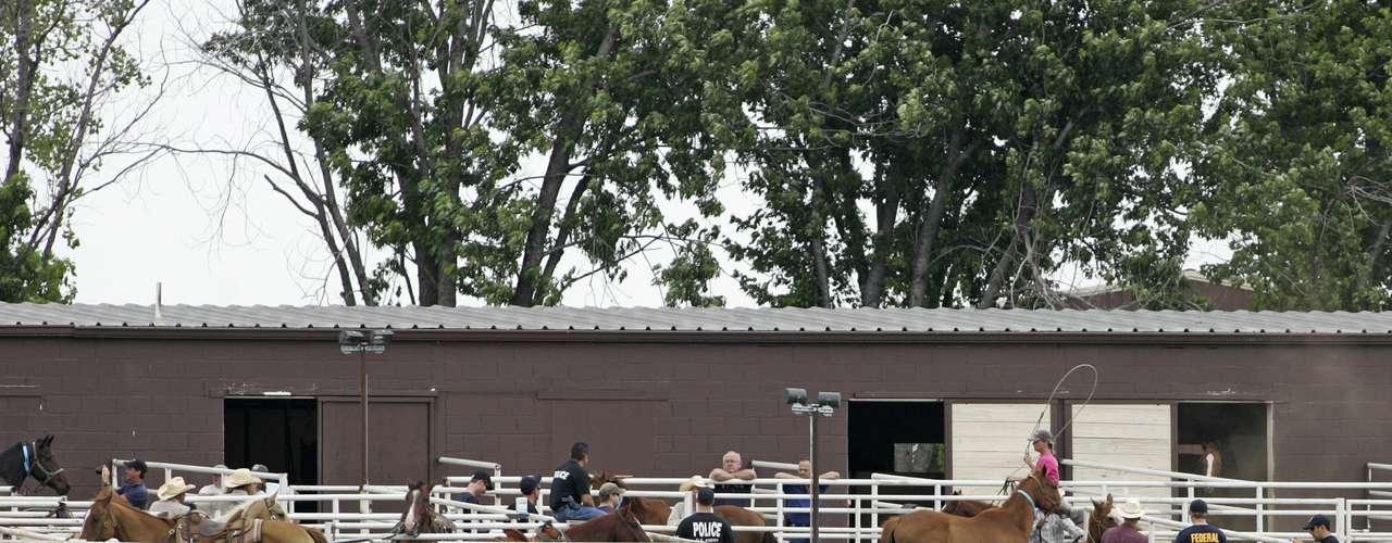 Las autoridades decomisaron 49 de los caballos más valiosos y lograron tener el control de los 414 restantes.