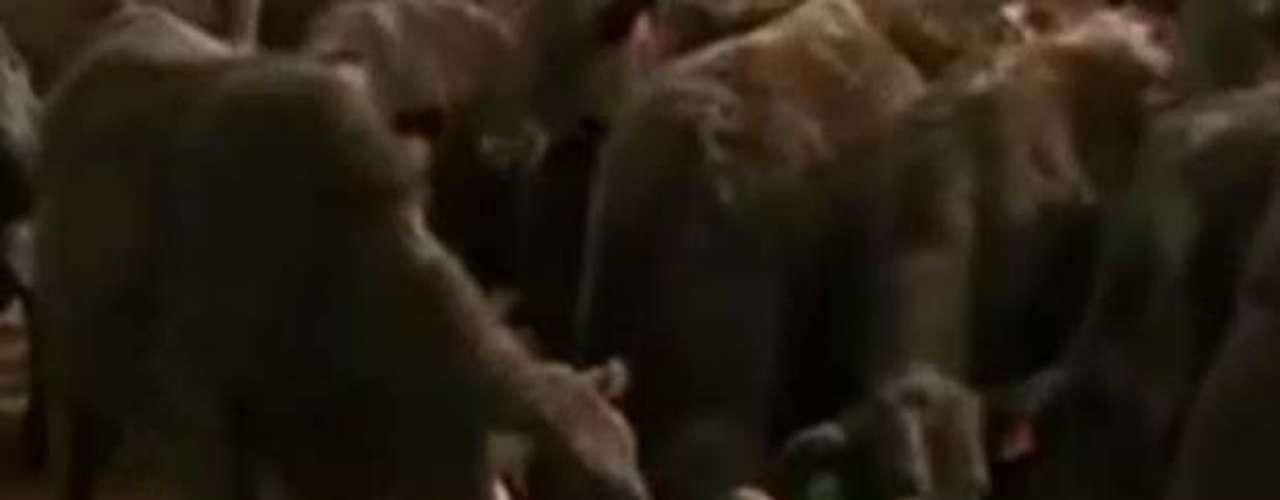Una mujer autista que interactúa con las vacas. Temple Grandin se dio cuenta de que tenía un talento especial para los animales: conseguía relacionarse con ellos de una manera que nadie más podía. Grandin, que es experta en sanidad animal y asesora del gobierno de Estados Unidos en esa materia, tiene autismo y cree que experimenta el mundo de una manera parecida a como lo hace un animal.