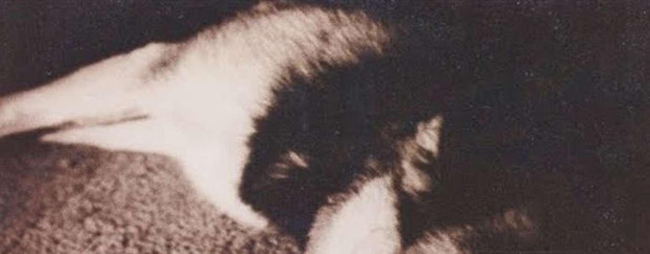 En ese tiempo John, junto a su entonces pareja, recogió al pequeño animal, salvándolo de un lugar en el que era maltratado.
