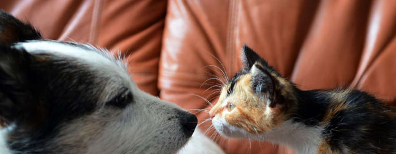 Como aparentes rivales, un perro llamado Nikon se mira frente a frente con un gato llamado Zoia en Varsovia, Polonia.