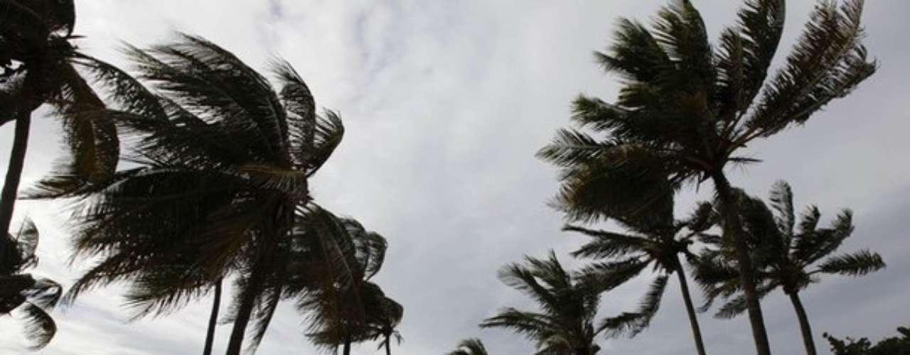 Las palmeras en la Habana eran testigos principales de los fuertes vientos causados por Isaac