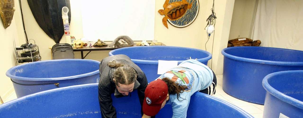 En Marathon, Florida, varias tortugas que se encontraban en estanques al aire libre fueron trasladadas a estanques interiores.