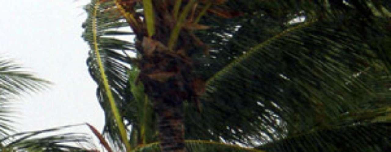 Luisiana, Misisipi y Alamaba (sur) declararon el estado de emergencia ante la trayectoria de Isaac, mientras las autoridades estatales coordinan planes para responder a los efectos del huracán.