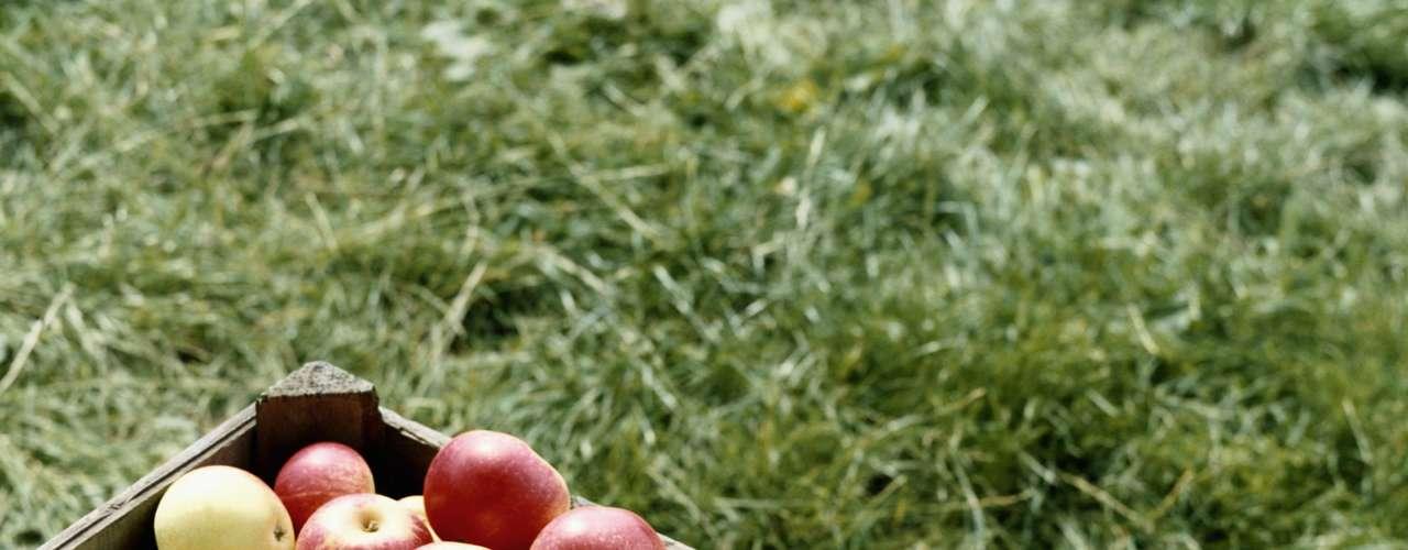 Disminuye el colesterol. Una manzana mediana tiene aproximadamente cuatro gramos de fibra. Una parte de esto es en forma de pectina, una fibra soluble que se ha relacionado con la reducción en los niveles de colesterol malo. Esto sucede porque, según WebMD, bloquea la absorción de colesterol, ayudando al cuerpo a usarlo en lugar de guardarlo.