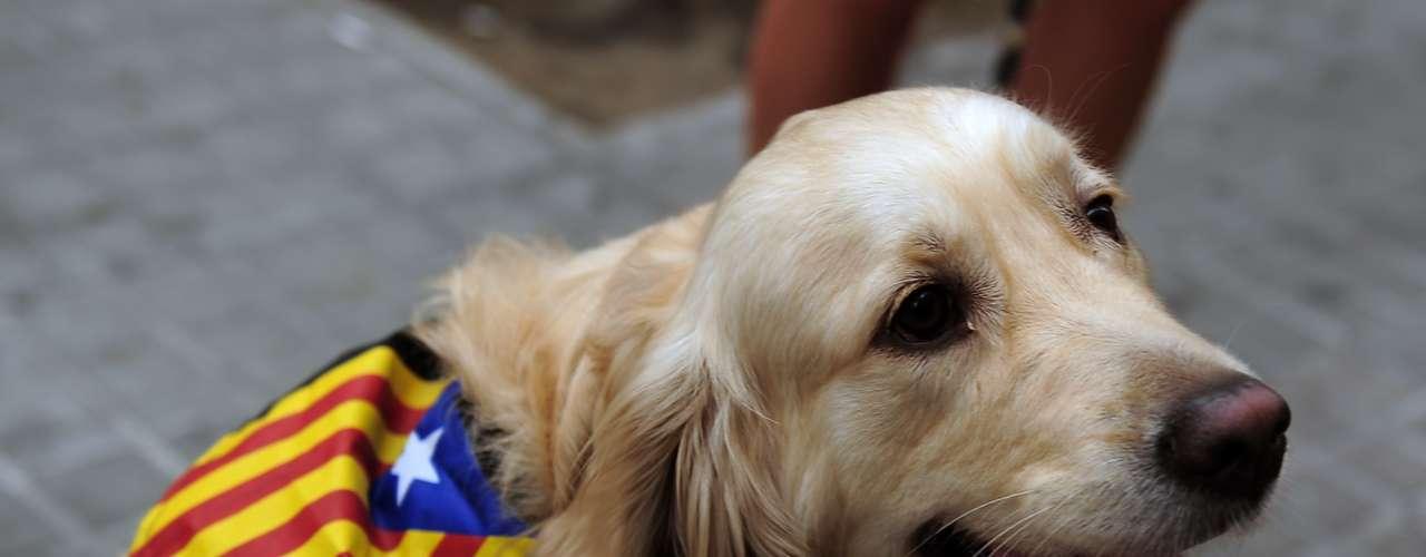 Las mascotas catalanas también celebran la Diada por las calles de Barcelona.