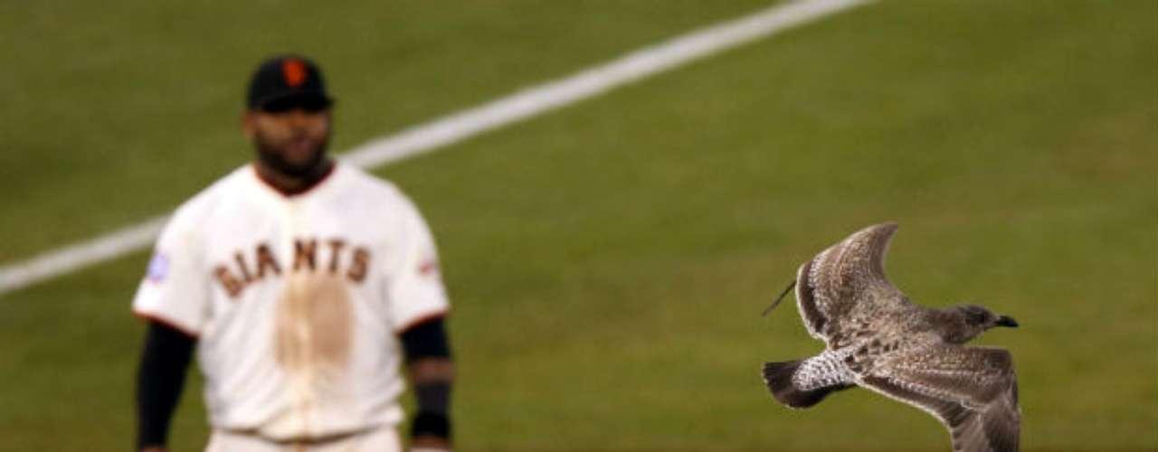 Una gaviota invadió el campo de juego, ante el asombro de Pablo Sandoval.