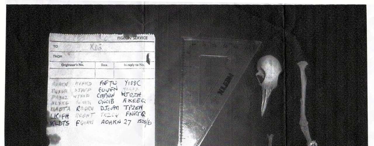 4- Una paloma muerta deja perpleja a agencia de inteligencia británica. 4- Una paloma muerta deja perpleja a agencia de inteligencia británica. El pedazo de papel con 27 grupos de cinco letras ha sido objeto de análisis de las agencias de inteligencia de Reino Unido pero no han logrado descifrarlo.