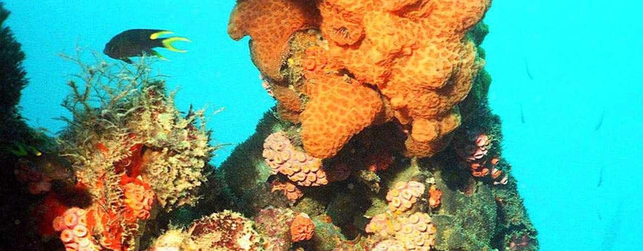 Este año los científicos descubrieron corales secretos bajo el mar de Australia. Según Catlin Seaview Survey, las poblaciones de coral saludables fueron descubiertas a 30 metros de profundidad , más allá del alcance de la mayoría de los buzos.