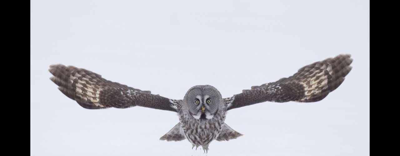 Durante 8 años, el fotógrafo británico Danny Green documentó la vida silvestre y los paisajes de las regiones árticas y subárticas del norte de Europa.