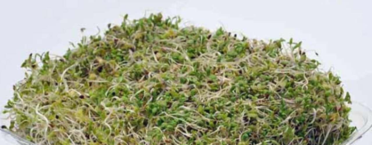 El germinado de alfalfa posee enzimas que ayudan a mejorar la digestión.