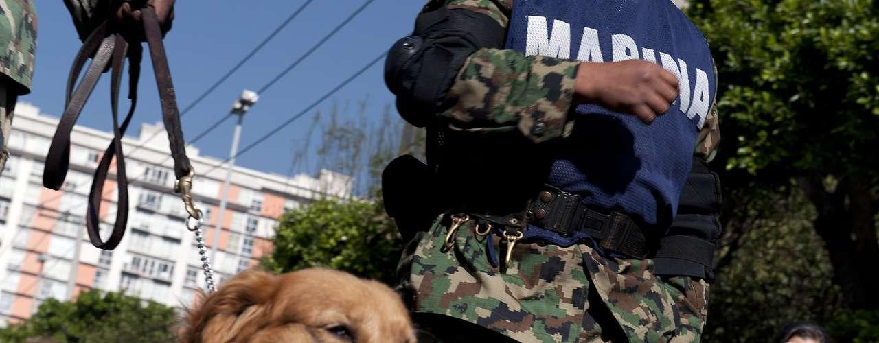Los canes también se han convertido en héroes al ayudar en las labores de rescate tras la explosión del edificio de Pemex en la ciudad de México.