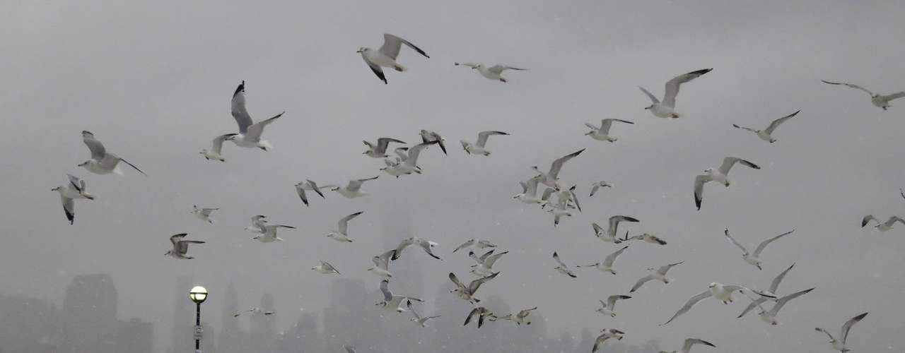 A flock of seagulls fly over a group of ducks across from the skyline of New York's Lower Manhattan in a park along the Hudson River in Hoboken, New Jersey, February 8, 2013. A blizzard blew into the northeastern United States on Friday, cutting short the workweek for millions who feared being stranded as state officials ordered roads closed ahead of what forecasters said could be record-setting snowfall. From New York to Maine, the storm began gently, dropping a light dusting of snow, but officials urged residents to stay home, rather than risk getting stuck in deep drifts when the storm kicks up later Friday afternoon. REUTERS/Gary Hershorn (UNITED STATES - Tags: ENVIRONMENT ANIMALS)