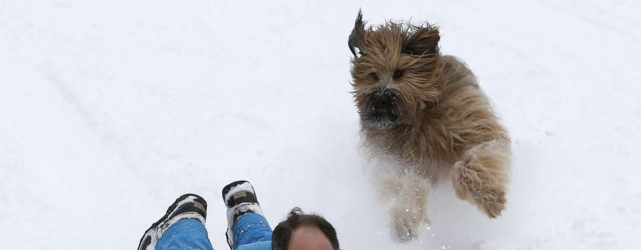 A man rides down a hill on a toboggan, chased by his dog in Central Park in New York February 9, 2013. A blizzard pummelled the Northeastern United States, killing at least one person, leaving hundreds of thousands without power and disrupting thousands of flights, media and officials said.   REUTERS/Carlo Allegri  (UNITED STATES - Tags: ENVIRONMENT DISASTER TPX IMAGES OF THE DAY ANIMALS)