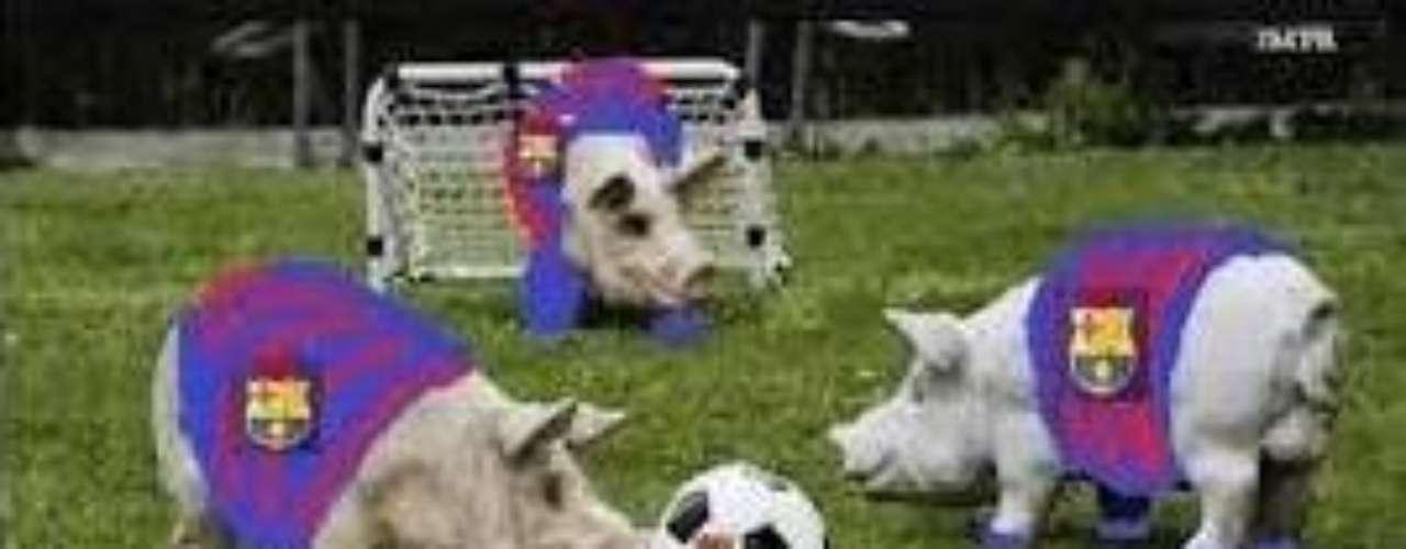 Si los jugadores de Real Madrid fueron catalogados como hienas, a los del Barcelona los equipararon con unos cerdos.