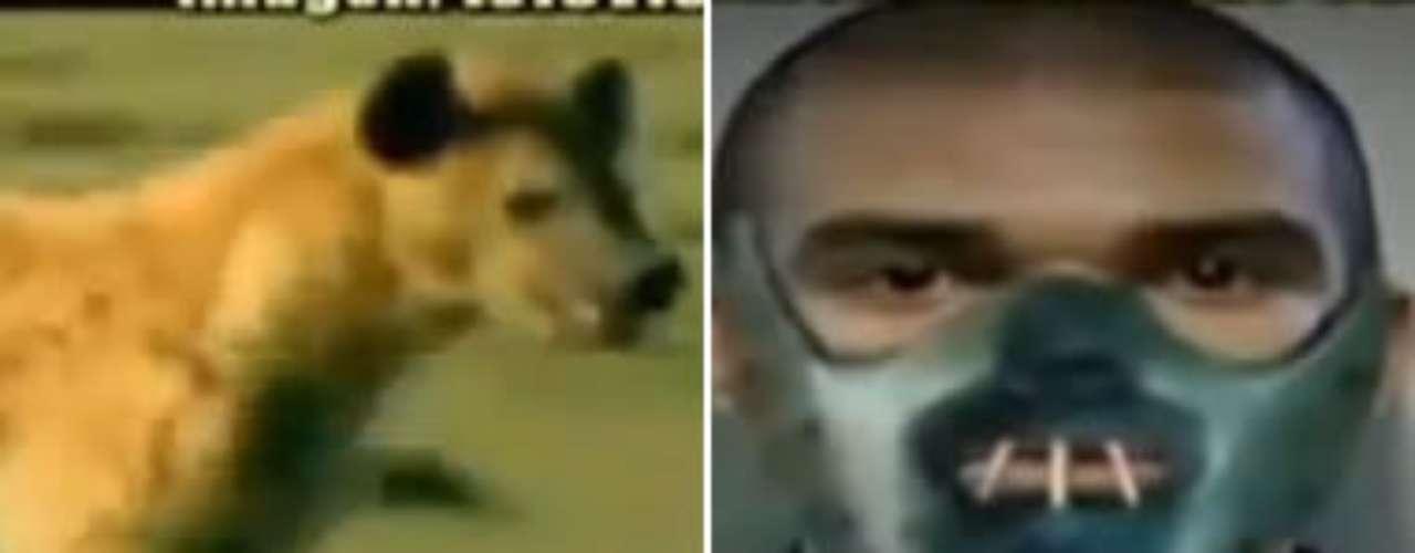 Las hienas están siendo el tema en las redes sociales gracias a Real Madrid