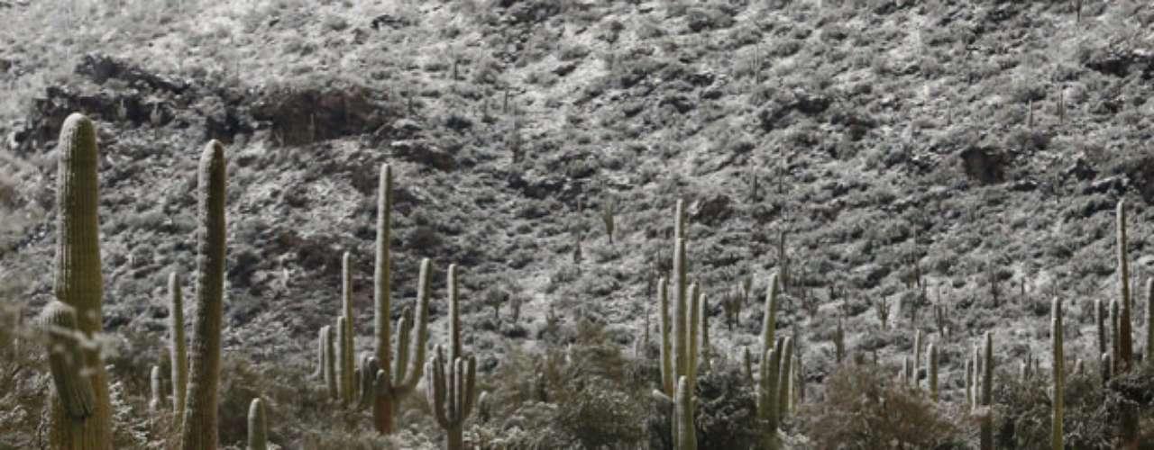 Asimismo se suspendieron las clases en el norte de Arizona y Colorado a causa de la nieve. Mindy Crane, portavoz del Departamento de Transporte de Colorado dijo que cientos de paleadoras de nieve fueron emplazadas en varios caminos ante la posibilidad de que se trate una de las peores ventiscas de la temporada.