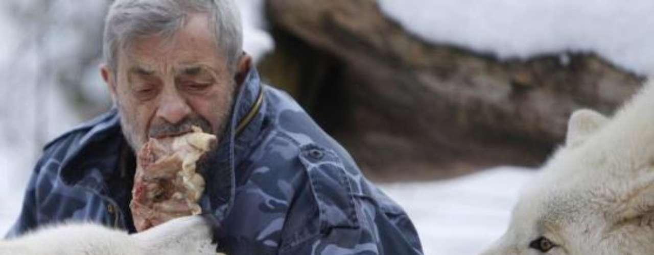 El exéntrico hombre obtuvo los lobos como cachorros en zoológicos y parques de la región. Los lobos han sido criados a mano.