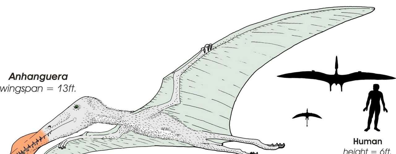 ¿Cómo lo hacían? Primero corrían con sus cuatro patas y llevaban sus enormes alas plegadas. Después, cambiaban a las patas traseras y empezaban a aletear.