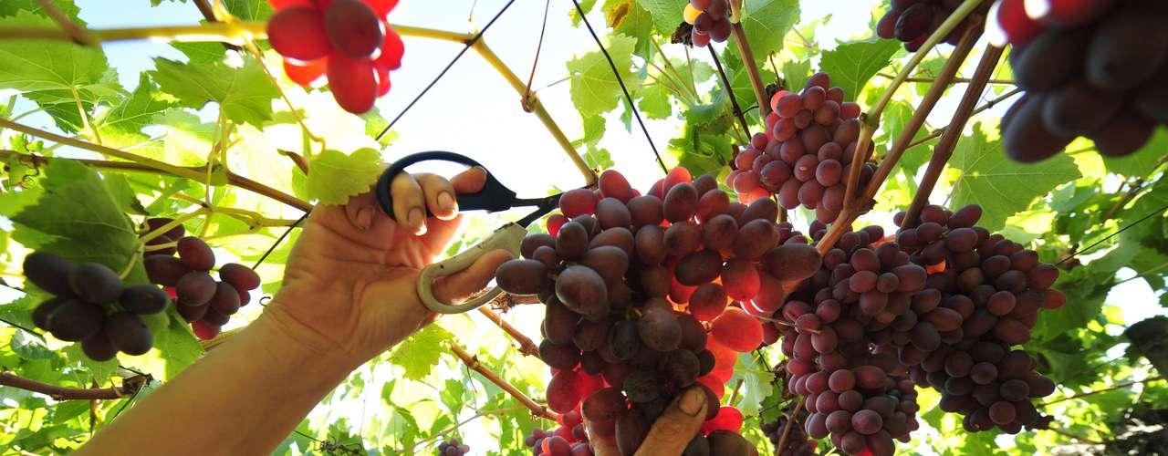 ¿Afecta la base rocosa de un viñedo a la calidad del vino? Este es un tema muy controvertido entre los dueños de viñedos y amantes de los vinos. Algunos insisten en que es importante que algunos vinos como el champán- se produzcan sólo en su localización geológica original y aseguran que pueden discernir la naturaleza de la tierra por el sabor. Los escépticos, en cambio, consideran que esto es sólo una nimiedad subjetiva.