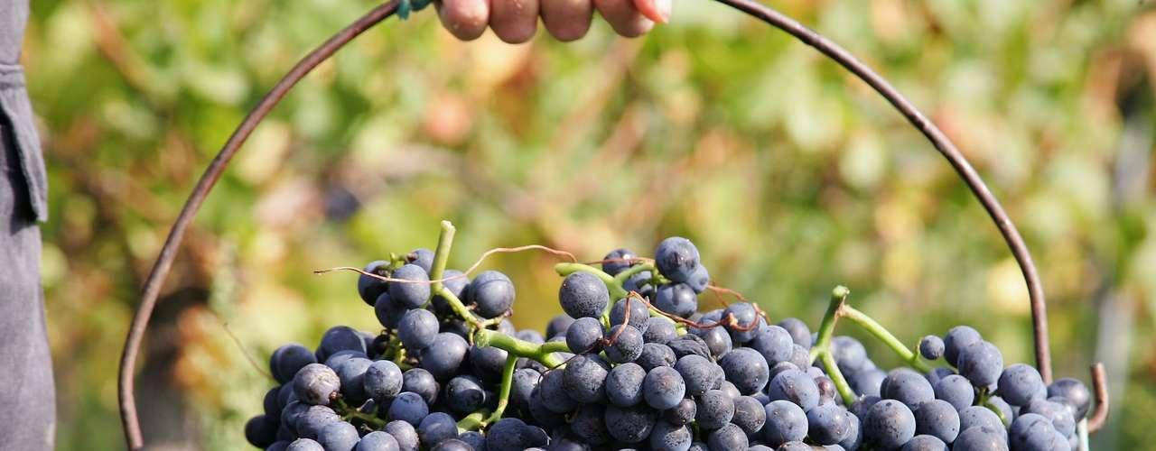 El contenido de arcilla, la porosidad y el color de esta tierra afectan a los nutrientes que entran a la vid, lo que podría -en principio- cambiar las características del vino resultante.
