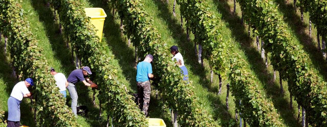 A diferencia del vino que se hace principalmente con el jugo de las uvas la cerveza es básicamente agua, y por eso su sabor depende en gran medida de la geología del lugar del que proviene.A diferencia del vino que se hace principalmente con el jugo de las uvas la cerveza es básicamente agua, y por eso su sabor depende en gran medida de la geología del lugar del que proviene.