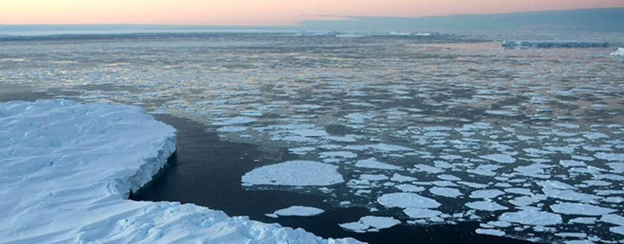 Las algas viven en la parte superior del hielo y por debajo de ella también, proporcionando un lugar de 'pastoreo' para el krill que se acumula debajo.