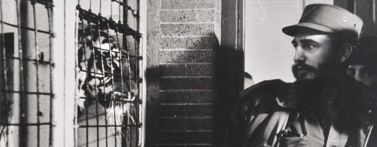 Las impresiones de la colección personal del fotógrafo fueron puestas a la venta por su hija Norka. Las imágenes incluyen esta imagen de Castro en el Zoológico del Bronx en 1959, publicada en la revista Life con el título \