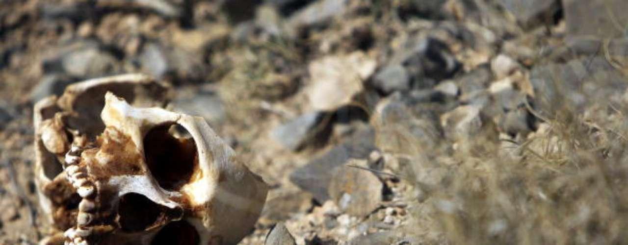 Hablando en particular de los coyotes, agrega con indignación: \