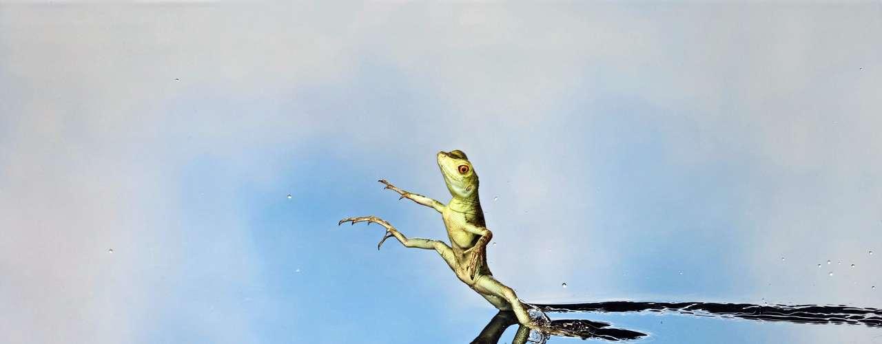 Brian Bevan registró esta espécie de lagarto que consigue \
