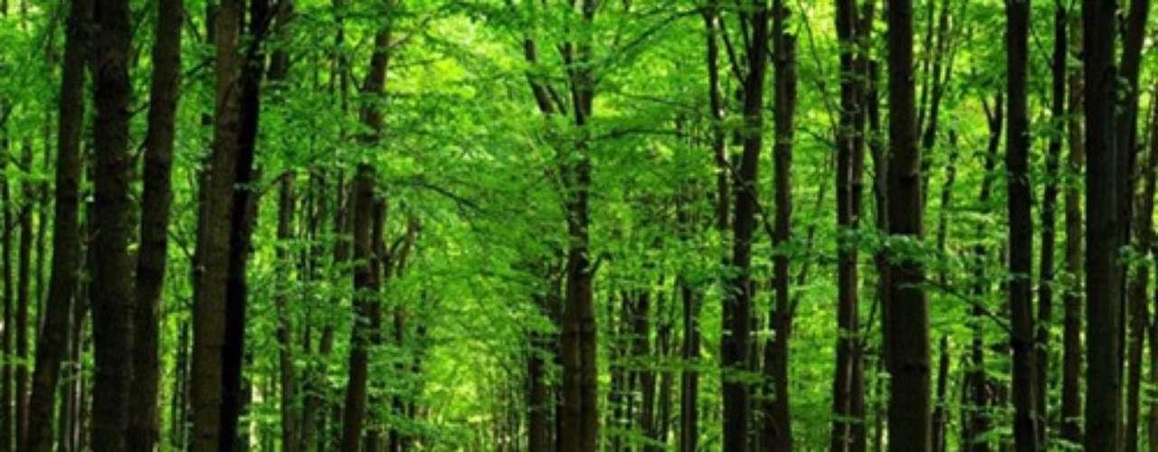 Sobre el suelo proyecte caminos de césped de un verde intenso, a continuación el barro de un camino recién mojado por la lluvia y le dará como resultado la sensación de sentirse de paseo por el bosque más frondoso.