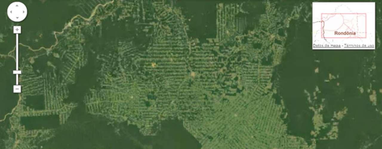 La selva amazónica se está reduciendo a un ritmo muy rápido para proporcionar tierras para la agricultura y la ganadería.