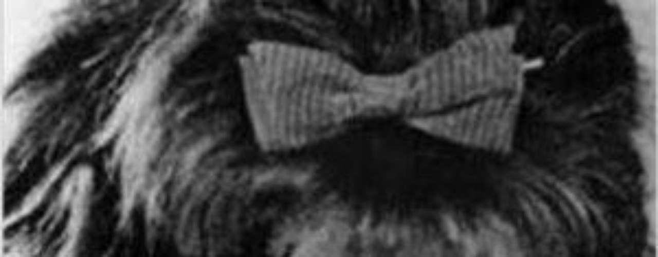 Se inició en la pantalla chica en 1971, con latelenovela 'Muchacha Italiana Viene a Casarse' yun año después ganó el premio Rostro de ElHeraldo. A dicho melodrama se siguieron: 'Cartassin Destino' (1973), 'La Maestra Méndez' (1973),'La Tierra' (1974).Lucía Méndezy la telenovela de sus memes y fotos eninternetLos 50 rostros más bellos delas telenovelasDivas de telenovelasque hicieron historia en la TV¿Triste realidad? Las estrellassin maquillaje